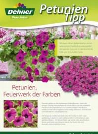 Dehner Feuerwerk der Farben Mai 2012 KW21