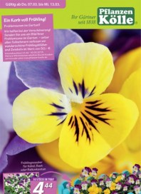 Pflanzen Kölle Ein Korb voll Frühling März 2013 KW10
