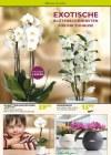 Pflanzen Kölle Pflanzen mit Liebe Februar 2016 KW06-Seite2
