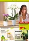 Pflanzen Kölle Pflanzen mit Liebe Februar 2016 KW06-Seite3