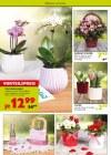 Pflanzen Kölle Pflanzen mit Liebe Februar 2016 KW06-Seite4