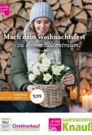 Gärtnerei Knauß & Söhne GbR Mach dein Weihnachtsfest zu einem Blütentraum November 2017 KW45