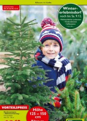 Pflanzen Kölle Pflanzen mit Liebe Dezember 2017 KW49