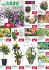 BayWa Blütenpracht für Ihr Zuhause!-Seite2
