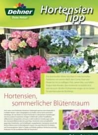 Dehner Blütentraum Mai 2012 KW21