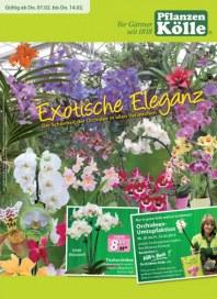 Pflanzen Kölle Exotische Eleganz Februar 2013 KW06