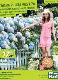 Pflanzen Kölle Blütenbälle zum Verlieben Juli 2013 KW27