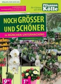 Pflanzen Kölle Noch größer und schöner März 2014 KW12