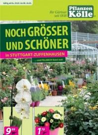 Pflanzen Kölle Noch größer und schöner März 2014 KW12 2
