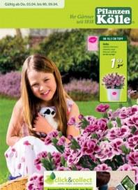 Pflanzen Kölle Ihr Gärtner seit 1818 April 2014 KW14