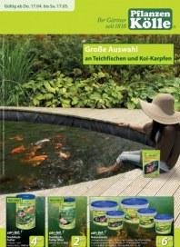 Pflanzen Kölle Große Auswahl an Teichfischen und Koi-Karpfen April 2014 KW16