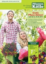 Pflanzen Kölle Gratis Pflanz-Aktion April 2014 KW18