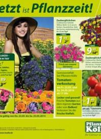Pflanzen Kölle Jetzt ist Pflanzzeit Mai 2014 KW21
