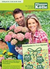 Pflanzen Kölle Geschenke für Ihren Garten Juni 2014 KW24