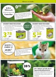 Pflanzen Kölle Tierische Angebote September 2014 KW39