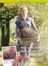 Pflanzen Kölle Pflanzen mit Liebe Oktober 2014 KW41