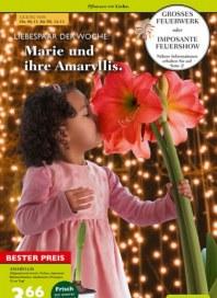 Pflanzen Kölle Pflanzen mit Liebe November 2014 KW45