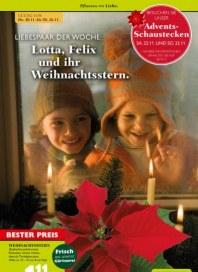 Pflanzen Kölle Pflanzen mit Liebe November 2014 KW47 1