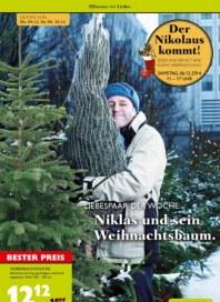 Pflanzen Kölle Pflanzen mit Liebe Dezember 2014 KW49