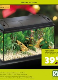 Pflanzen Kölle Angebot Dezember 2014 KW50