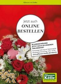 Pflanzen Kölle Jetzt auch online bestellen Februar 2015 KW06