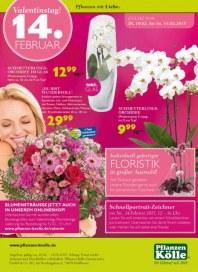 Pflanzen Kölle Valentinstag Februar 2015 KW07