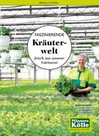 Pflanzen Kölle Faszinierende Kräuterwelt frisch aus unserer Gärtnerei März 2015 KW13