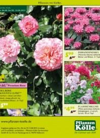 Pflanzen Kölle Pflanzen mit Liebe August 2015 KW32