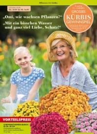Pflanzen Kölle Pflanzen mit Liebe September 2015 KW37