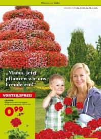 Pflanzen Kölle Pflanzen mit Liebe April 2016 KW14