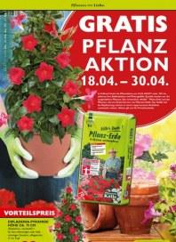 Pflanzen Kölle Pflanzen mit Liebe April 2016 KW16 1