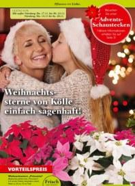 Pflanzen Kölle Weihnachtssterne von Kölle – einfach sagenhaft November 2016 KW46