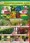 hagebaumarkt Hagebau (Weekly1) März 2019 KW11 8-Seite6